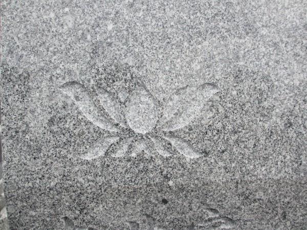 中井家 蓮の花